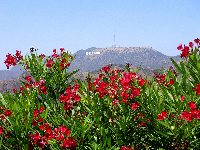 griffith-park-los-angeles-united-states-590_4