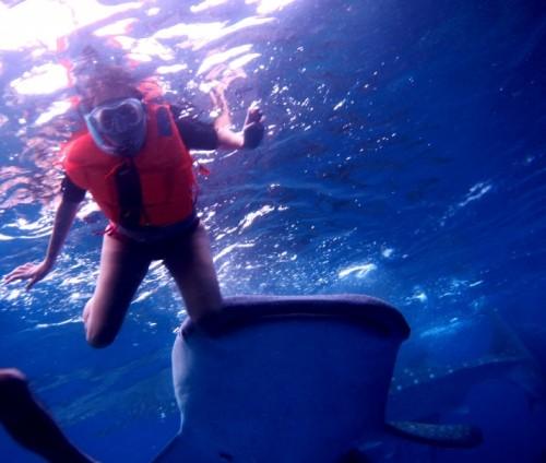 Squalo Balena nelle FIlippine